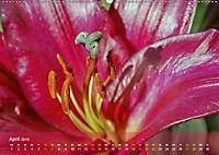 Lilien ganz nah (Wandkalender 2019 DIN A2 quer) - Produktdetailbild 4