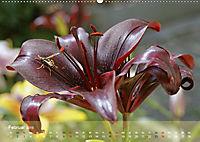 Lilien ganz nah (Wandkalender 2019 DIN A2 quer) - Produktdetailbild 2