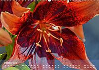 Lilien ganz nah (Wandkalender 2019 DIN A2 quer) - Produktdetailbild 10