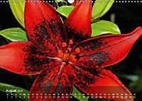 Lilien ganz nah (Wandkalender 2019 DIN A3 quer) - Produktdetailbild 8