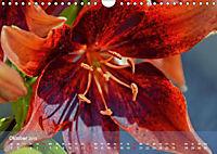 Lilien ganz nah (Wandkalender 2019 DIN A4 quer) - Produktdetailbild 10