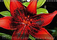 Lilien ganz nah (Wandkalender 2019 DIN A4 quer) - Produktdetailbild 8