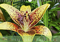 Lilien ganz nah (Wandkalender 2019 DIN A4 quer) - Produktdetailbild 5