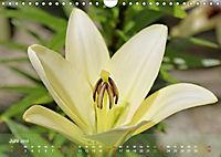 Lilien ganz nah (Wandkalender 2019 DIN A4 quer) - Produktdetailbild 6