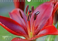 Lilien ganz nah (Wandkalender 2019 DIN A4 quer) - Produktdetailbild 12