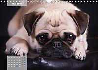 Lillie Mopsgetier - mopsfidel durchs Jahr (Wandkalender 2019 DIN A4 quer) - Produktdetailbild 5