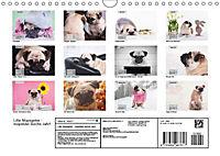 Lillie Mopsgetier - mopsfidel durchs Jahr (Wandkalender 2019 DIN A4 quer) - Produktdetailbild 13