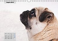 Lillie Mopsgetier - mopsfidel durchs Jahr (Wandkalender 2019 DIN A4 quer) - Produktdetailbild 8