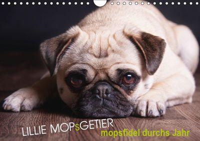 Lillie Mopsgetier - mopsfidel durchs Jahr (Wandkalender 2019 DIN A4 quer), Martina Raab