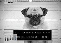 Lillie Mopsgetier - mopsfidel durchs Jahr (Wandkalender 2019 DIN A4 quer) - Produktdetailbild 7