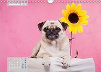 Lillie Mopsgetier - mopsfidel durchs Jahr (Wandkalender 2019 DIN A4 quer) - Produktdetailbild 9