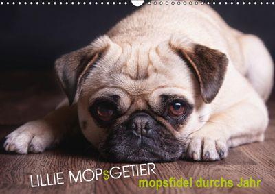 Lillie Mopsgetier - mopsfidel durchs Jahr (Wandkalender 2019 DIN A3 quer), Martina Raab