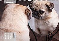 Lillie Mopsgetier - mopsfidel durchs Jahr (Wandkalender 2019 DIN A3 quer) - Produktdetailbild 2