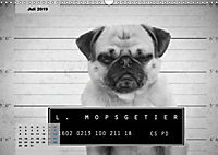 Lillie Mopsgetier - mopsfidel durchs Jahr (Wandkalender 2019 DIN A3 quer) - Produktdetailbild 7
