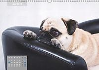 Lillie Mopsgetier - mopsfidel durchs Jahr (Wandkalender 2019 DIN A3 quer) - Produktdetailbild 6