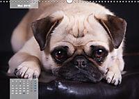 Lillie Mopsgetier - mopsfidel durchs Jahr (Wandkalender 2019 DIN A3 quer) - Produktdetailbild 5