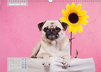 Lillie Mopsgetier - mopsfidel durchs Jahr (Wandkalender 2019 DIN A3 quer) - Produktdetailbild 9