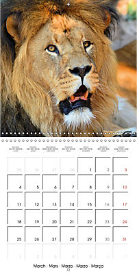 Lions Kings of the Jungle (Wall Calendar 2019 300 × 300 mm Square) - Produktdetailbild 3