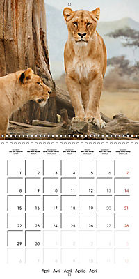Lions Kings of the Jungle (Wall Calendar 2019 300 × 300 mm Square) - Produktdetailbild 4
