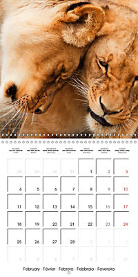 Lions Kings of the Jungle (Wall Calendar 2019 300 × 300 mm Square) - Produktdetailbild 2