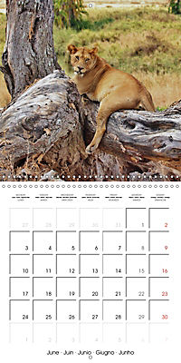 Lions Kings of the Jungle (Wall Calendar 2019 300 × 300 mm Square) - Produktdetailbild 6