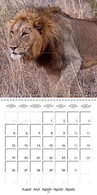 Lions Kings of the Jungle (Wall Calendar 2019 300 × 300 mm Square) - Produktdetailbild 8