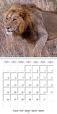 Lions Kings of the Jungle (Wall Calendar 2019 300 × 300 mm Square) - Produktdetailbild 8