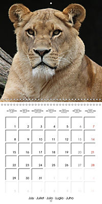 Lions Kings of the Jungle (Wall Calendar 2019 300 × 300 mm Square) - Produktdetailbild 7
