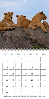 Lions Kings of the Jungle (Wall Calendar 2019 300 × 300 mm Square) - Produktdetailbild 9