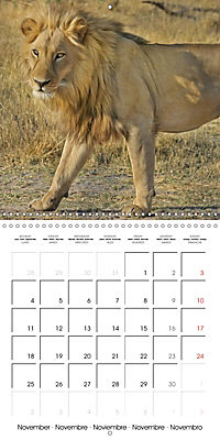 Lions Kings of the Jungle (Wall Calendar 2019 300 × 300 mm Square) - Produktdetailbild 11