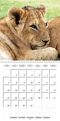Lions Kings of the Jungle (Wall Calendar 2019 300 × 300 mm Square) - Produktdetailbild 10