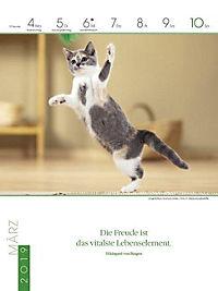 Literaturkalender Katzen 2019 - Produktdetailbild 10