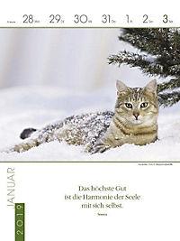 Literaturkalender Katzen 2019 - Produktdetailbild 5