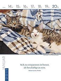 Literaturkalender Katzen 2019 - Produktdetailbild 3