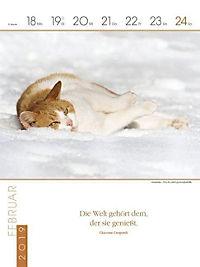 Literaturkalender Katzen 2019 - Produktdetailbild 8