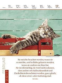Literaturkalender Katzen 2019 - Produktdetailbild 7