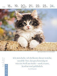 Literaturkalender Katzen 2019 - Produktdetailbild 12