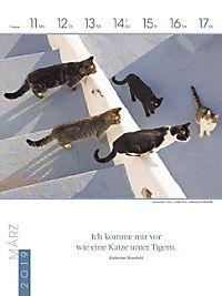 Literaturkalender Katzen 2019 - Produktdetailbild 11