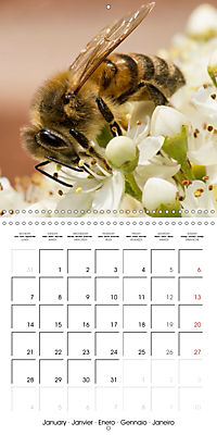 Little Critters In The UK (Wall Calendar 2019 300 × 300 mm Square) - Produktdetailbild 1
