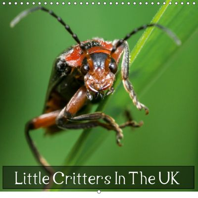 Little Critters In The UK (Wall Calendar 2019 300 × 300 mm Square), Icy Ho