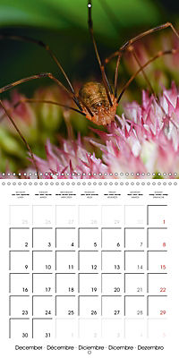 Little Critters In The UK (Wall Calendar 2019 300 × 300 mm Square) - Produktdetailbild 12