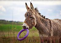 Little Donkey with Friends (Wall Calendar 2019 DIN A3 Landscape) - Produktdetailbild 4