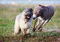 Little Donkey with Friends (Wall Calendar 2019 DIN A3 Landscape) - Produktdetailbild 8