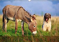 Little Donkey with Friends (Wall Calendar 2019 DIN A3 Landscape) - Produktdetailbild 10