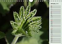 Little Water Pearls (Wall Calendar 2019 DIN A4 Landscape) - Produktdetailbild 1