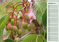 Little Water Pearls (Wall Calendar 2019 DIN A4 Landscape) - Produktdetailbild 10