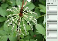 Little Water Pearls (Wall Calendar 2019 DIN A4 Landscape) - Produktdetailbild 6