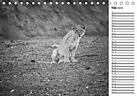 Löwen schwarz weiß (Tischkalender 2019 DIN A5 quer) - Produktdetailbild 5