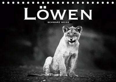 Löwen schwarz weiß (Tischkalender 2019 DIN A5 quer), Robert Styppa