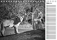Löwen schwarz weiß (Tischkalender 2019 DIN A5 quer) - Produktdetailbild 3
